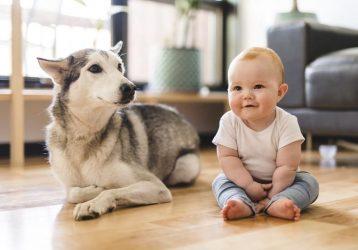 Cómo preparar a un perro para la llegada de un bebé